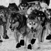 Top 9 Things to Do at Iditarod