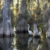 Everglades in Top 10 Natural Wonders to See Before They're Lost