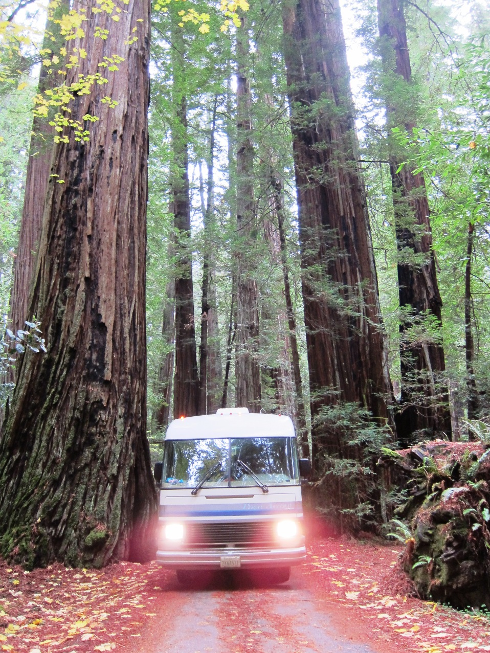 RV in the Redwoods